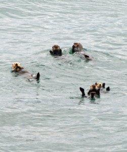 Cruise-Crocodile-Sea-Otters