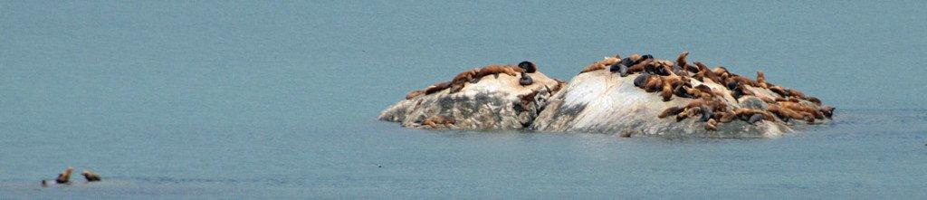 Cruise Crocodile sea lions